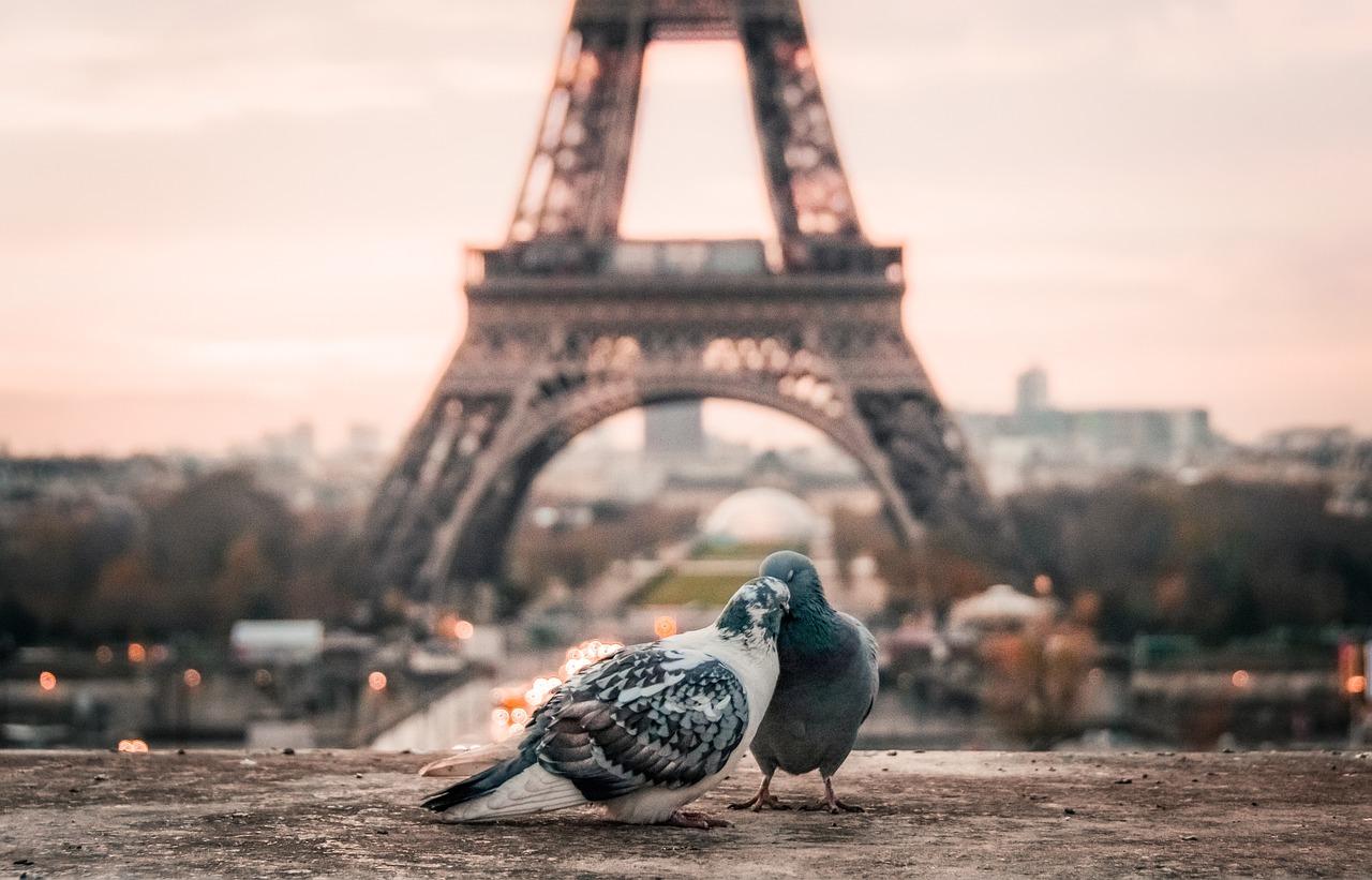 Vue de deux pigeons devant la tour Eiffel à Paris